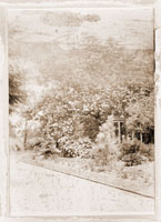 Image of Sepia photo of old arboretum.  Photo card edges are marred with dried adhesive, probably from previous border or frame.  Photo is in very poor condition, part of image is unrecognizable due to emulsion loss.