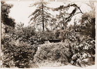 Image of Old arboretum, screen planting.  GPN for this print was removed from collection.