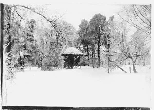 Image of Old arboretum, winter scene.  GPN for this print was removed from collection.