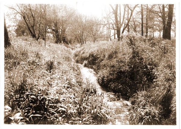 Image of Old arboretum, Stream.  GPN for this print was removed from collection.  Similar, but NOT the same as GPN 1982-0234.