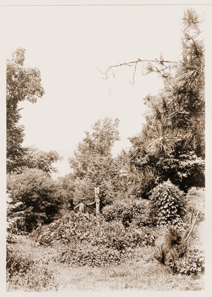 Image of Scene in the Missouri Botanical Garden showing damage from the tornado of May 27,1896.
