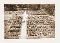 Image of MBG Iris Garden, mounted on board with another print.