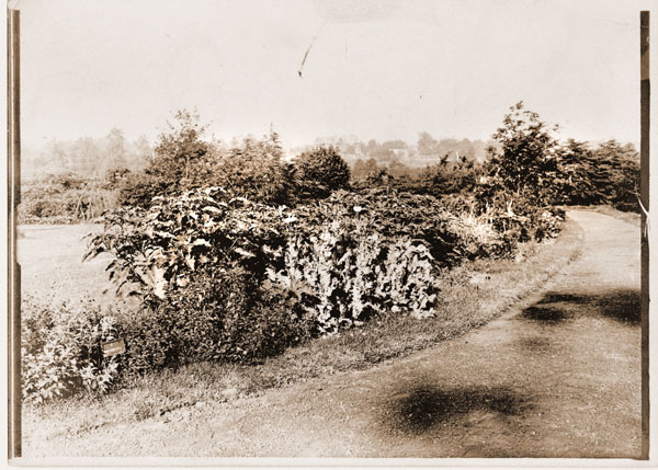 Image of One of two photographs of the medicinal garden.