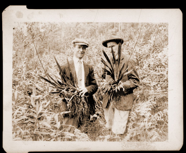 Image of Scene of Colombian Expedition.  Copy negative available.  Collecting orchids on Andes of Bogota.  George Pring, left, voluntary guide, Cyril Allen, right (later died of jungle fever.)