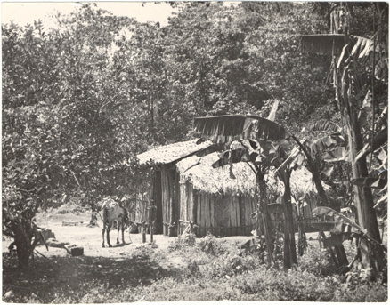 Image of Indian Hut in the rainforest, Rancho Aguajito.