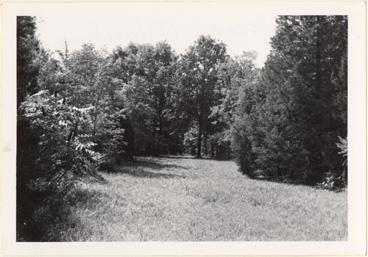 Image of Arboretum (Gray Summit) Trailway near Wolf Run Lake, July 1967.
