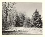 Image of Arboretum (Gray Summit) 1960s.