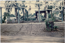 Image of Climatron Construction.  Front of Climatron.  Picture taken Oct 3, 1959.