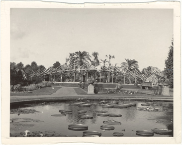 Image of Missouri Botanical (Shaw's) Garden personnel hoped to save a group of palm trees by building the Climatron around them, but the trees failed to make it through the winter of 1959.