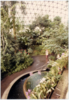 Image of Climatron Interior I - Negative available PHO 2005-0365