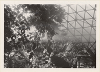 Image of Climatron Interior II - Cloud formation in Climatron.  Bulletin July-Aug '68.