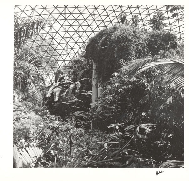 Image of Climatron Interior II.  Bananas, bamboo, palms, and Passion flower vines in the Climatron.