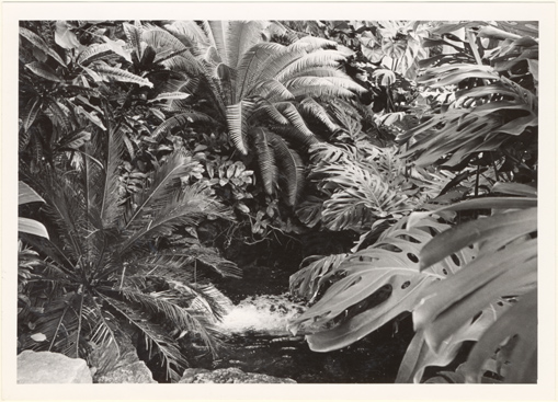 Image of Climatron Interior II.  Cycads are a prominent feature of green mountain around the mountain stream.  Mounted with PHO 2005-0411.