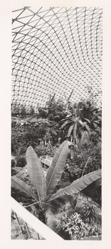 Image of Climatron Interior II.  Mounted with PHO 2005-0417.