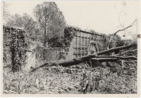 Image of Windstorm and hail damage 1 Sep 46.  Henry Shaw brick wall in Linnean Garden broken by Tree of Heaven.  MBG Bul 35, 1947, pg. 8.  Same as PHO 2005-0549.