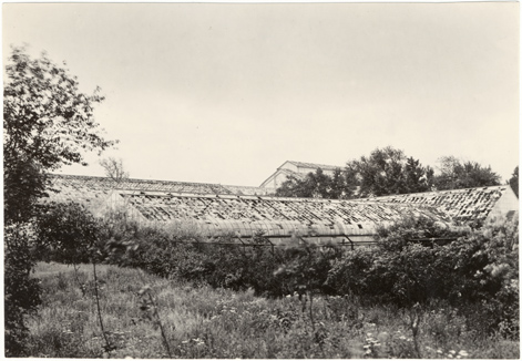 Image of Propagating houses.