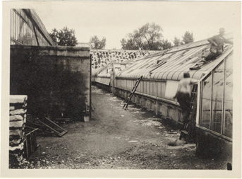 Image of Hailstorm damage to greenhouses, May 28, 1927.  Exterior.  Mounted with PHO 2005-0515, PHO 2005-0517, PHO 2005-0518, PHO 2005-0519