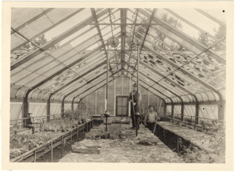 Image of Hailstorm damage to greenhouses, May 28, 1927.  Interior.  Mounted with PHO 2005-0515, PHO 2005-0516, PHO 2005-0518, PHO 2005-0519