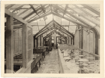 Image of Hailstorm damage to greenhouses, May 28, 1927.  Interior.  Mounted with PHO 2005-0515, PHO 2005-0516, PHO 2005-0517, PHO 2005-0519