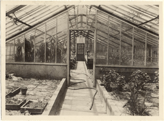 Image of Hailstorm damage to greenhouses, May 28, 1927.  Interior.  Mounted with PHO 2005-0515, PHO 2005-0516, PHO 2005-0517, PHO 2005-0518