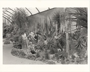 Image of Desert House interior - with people gardening.  See MBG Bull 65(10):5 (Oct 1977).