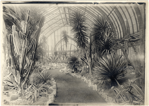 Image of Desert House, interior.  Cactus Display 1939.