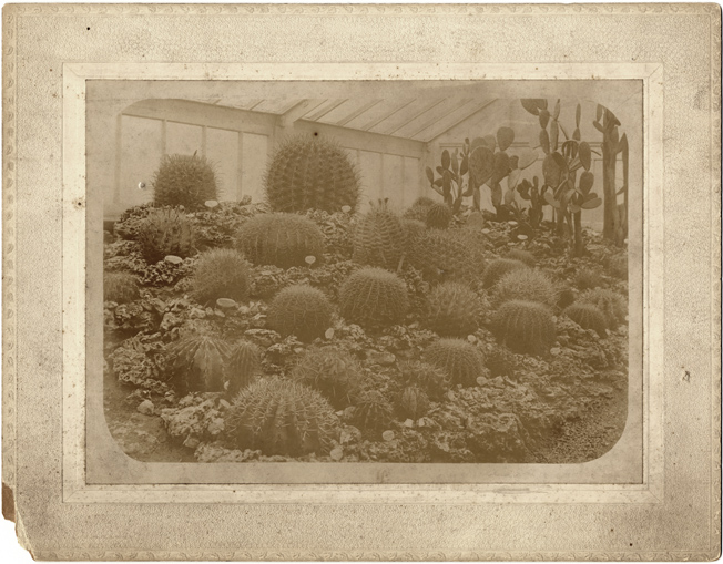 Image of Cactus House (interior) about 1902.  (Reference on back to Glass Negative #262)