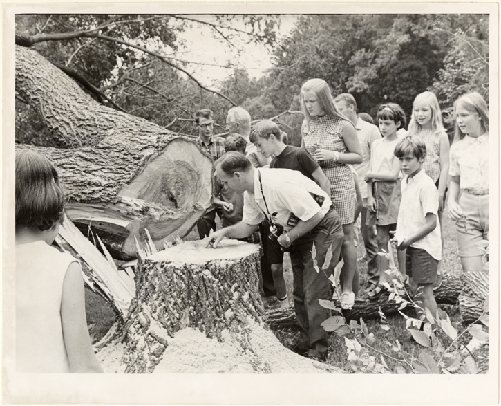 Image of Kenneth Peck counting rings and explaining Phloem necrosis disease to his nature study class..  Daniel Boone elm seedling.  45 years old.  MBG Bull 56(6):9 (Nov.-Dec. 1968).  Photo by Renyold Ferguson.  St. Louis Post-Dispatch.