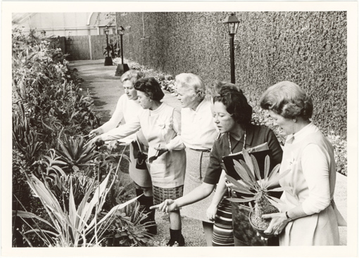 Image of Guides in Growing Center (west side of Floral Display House).  1970's (1973-78?).  Had plant sales there per WHL. MBF Bull 60(3):30 (May-June 1972).