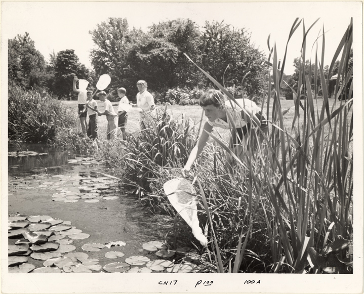 Image of Education.  Catching dragonflies.  MBG Bull 50(1):14 (Jan. 1962).  MBG Bull 49(6):[100] (June 1961).  Negative available at PHO 2005-0888.