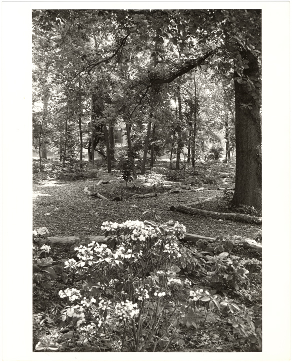 Image of English Woodland Garden.  May 1977