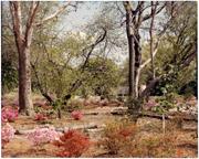 Image of English Woodland Garden.  April 17, 1976.