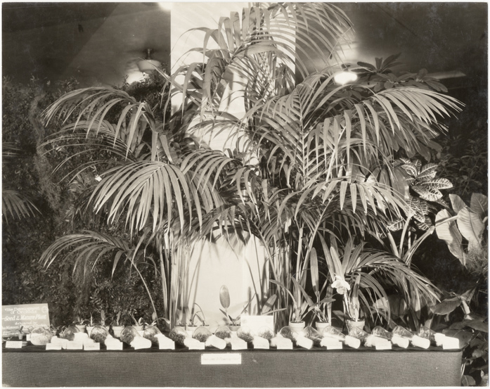 Image of Missouri Botanical Garden exhibit at American Orchid Society Fourth National Show.  Washington, D.C.  October 16, 1930