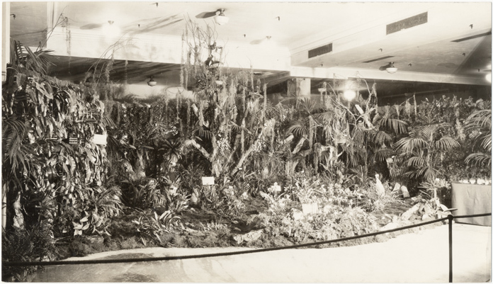 Image of Missouri Botanical Garden orchid exhibit at Fourth National Show.  Washington, D.C.  October 16, 1930