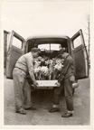 Image of Hauling flowers for the 1953 Easter Show.  Left, Charles Fritz, right, Claude Johnston.  Mounted with PHO 2006-0785, PHO 2006-0787, PHO 2006-0788, and PHO 2006-0789.