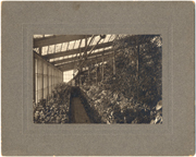Image of Greenhouse, 1868.  West wing of Old Main Plant House. N.d. ca. 1900.