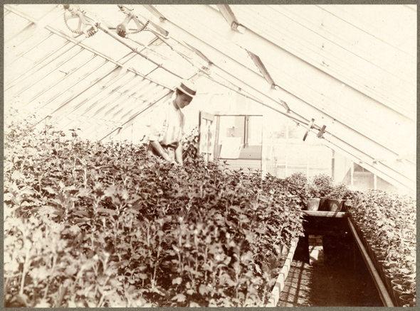 Image of Greenhouse in north end of Garden about 1900.  Shelby Jones