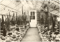 Image of View of the Old Cactus House, 1914.  Mounted with PHO 2006-0952.