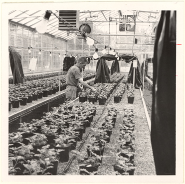 Image of Automatic watering and injection feeding, growing area.  Mounted with PHO 2006-0965.