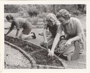 Image of Members getting their Herb Garden in shape for next spring, towards the close of the first season.  Bulletin, March '66.  Mounted with PHO 2006-0982
