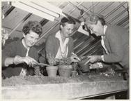 Image of Members of Saint Louis Herb Society potting herbs.