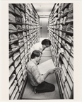 Image of Working in the Herbarium