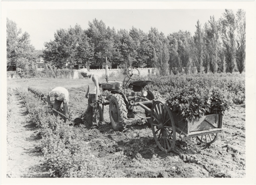 Image of Horticulture - equipment.  Tractor.  Negative available at PHO 2006-1213.