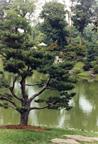 Image of Japanese Garden.  Spring/summer scene.