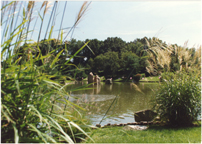 Image of Japanese Garden.  Summer lake view.