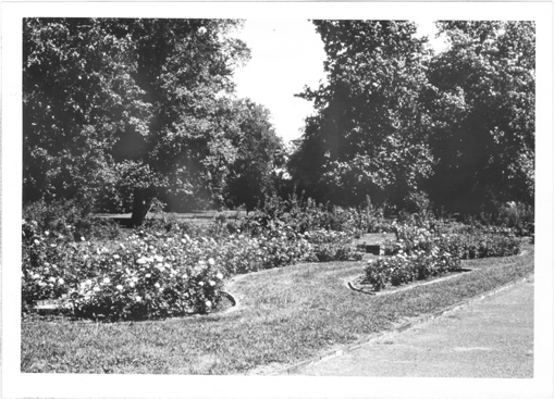 Image of Lehmann Rose Garden.  Shaw Camera.  Mounted with PHO 2006-2004.