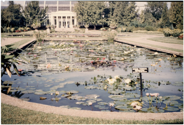 Image of Palm House and Lily pools.  Picture made from a color slide.