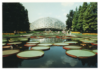 Image of Lily pools and Climatron