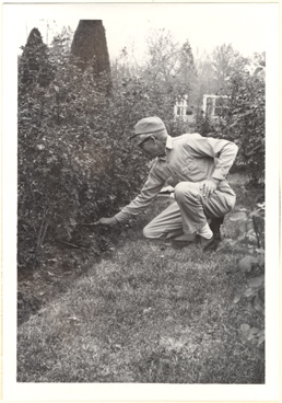 Image of Alfred Saxdal working in the old rose garden.  Mounted with PHO 2006-2557 and PHO 2006-2558.