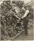 Image of Two staff spraying plants.  Historical.  Mounted with PHO 2006-2563.